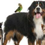 Phyto-aromathérapie pour animaux de compagnie